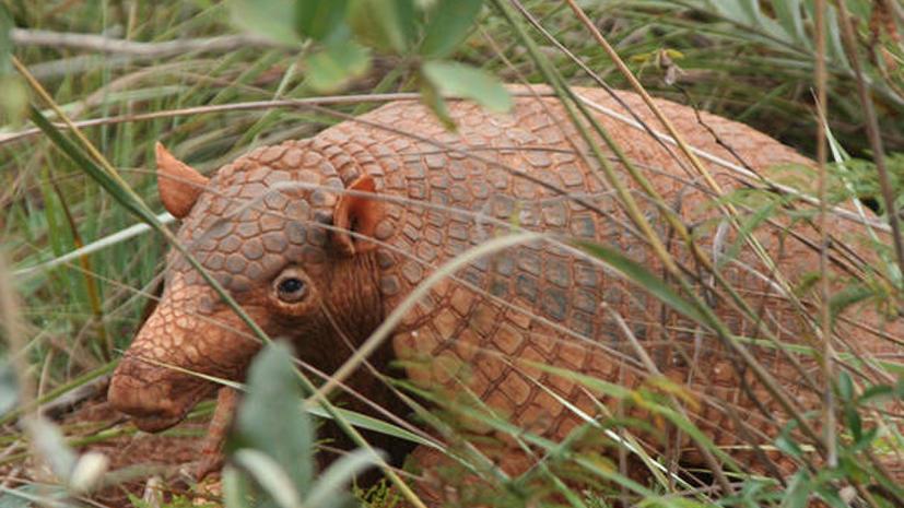 Исследование: животному миру Земли грозит массовое вымирание