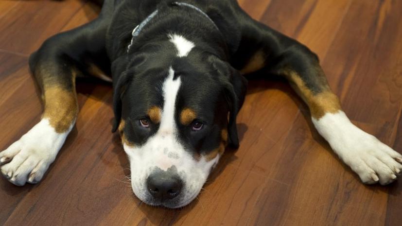 Американских собак лишают «права голоса»