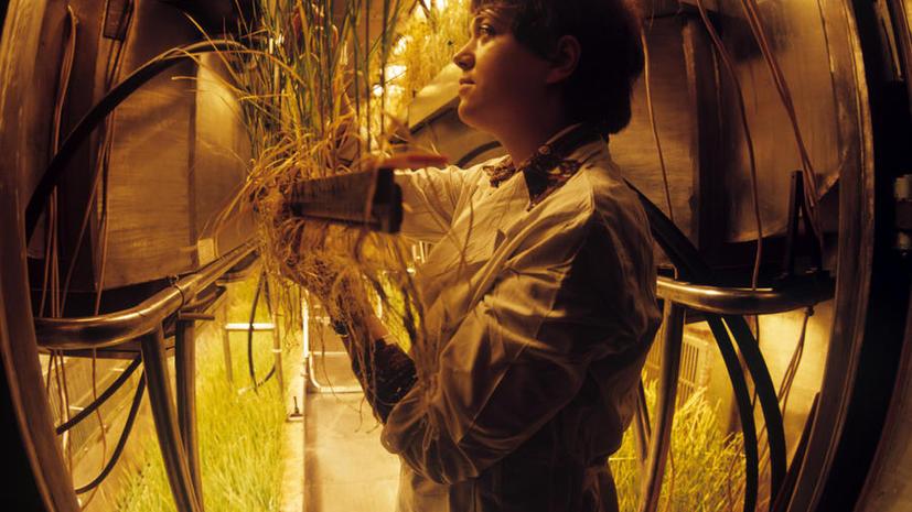 В Финляндии в замороженных овощах обнаружили семена ядовитого дурмана