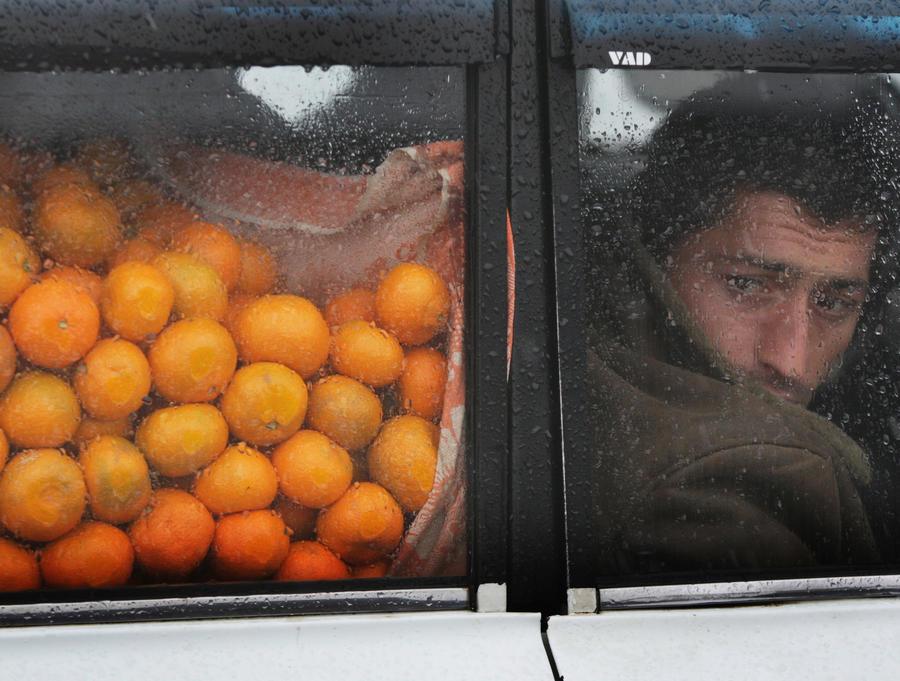 Грузинские мандарины изменят ценообразование на российских прилавках