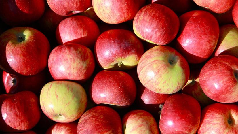 Исследование: климат меняет вкус яблок