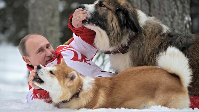 Японский губернатор рад, что Путин ухаживает за подаренным щенком