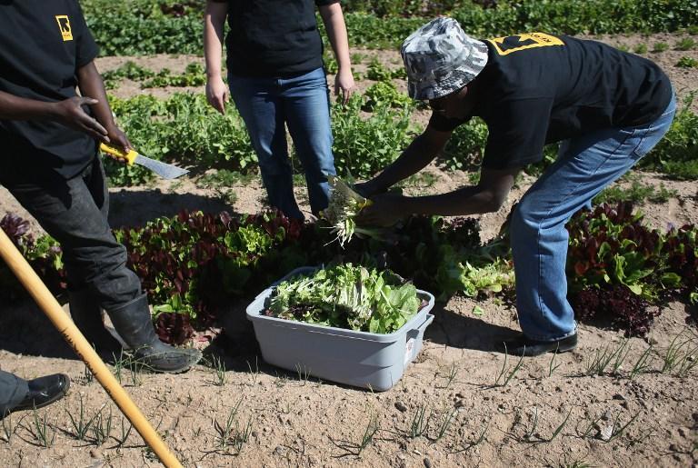 Эксперты: листья салата опаснее фаст-фуда