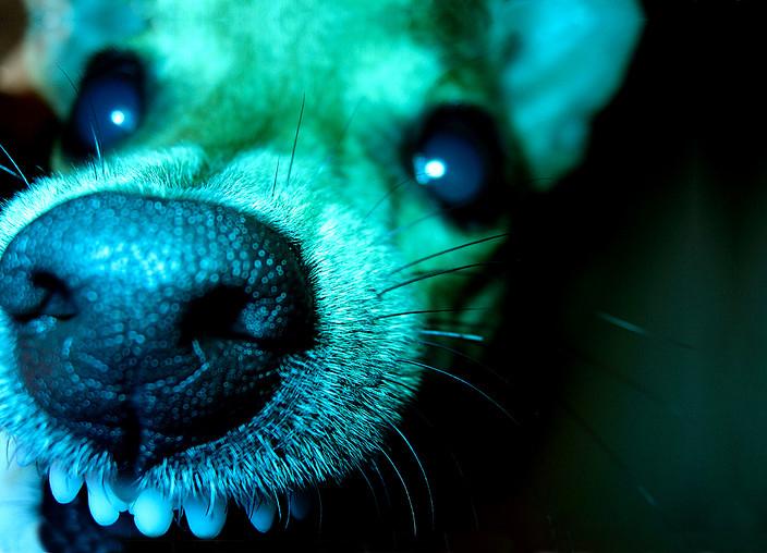 Клонированные собаки-убийцы терроризируют Нью-Йорк