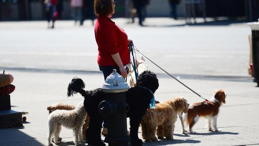 В Петербурге могут ввести налог на собак