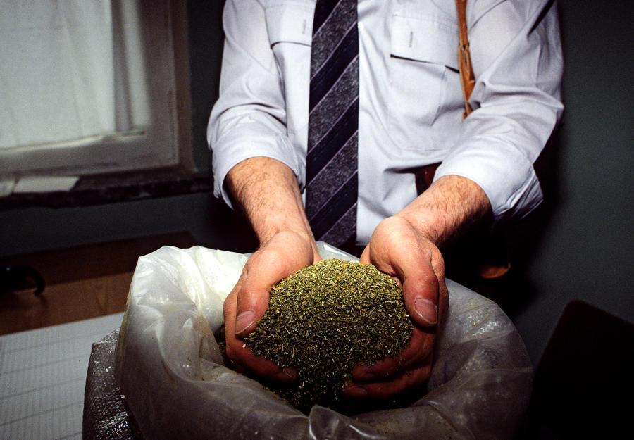 В Уругвае вступил в силу закон о легализации марихуаны