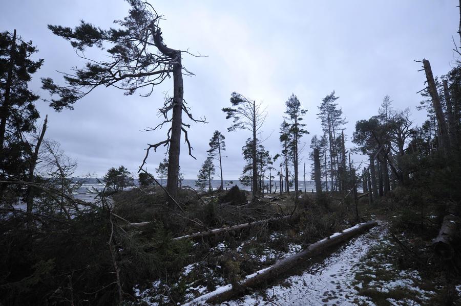 В Карелии задержаны два марокканца, пытавшихся пройти в Финляндию по нарисованной карте