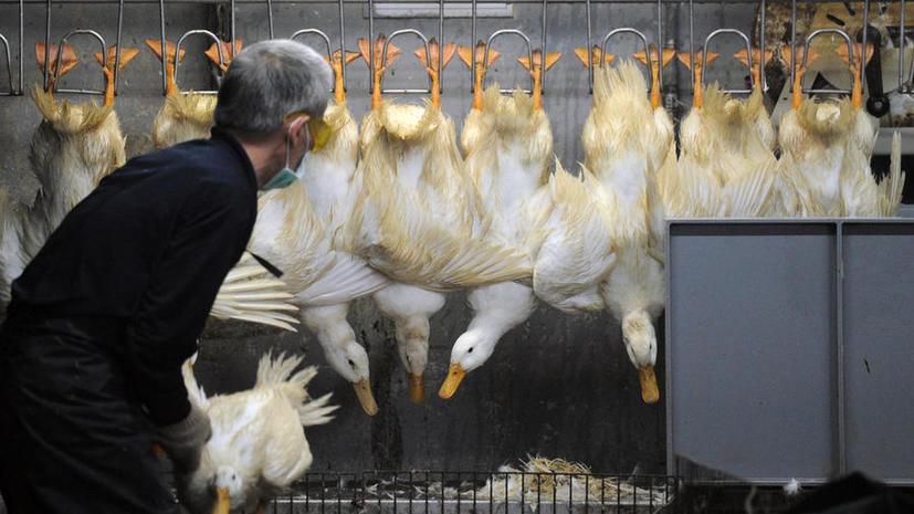 Вспышка птичьего гриппа в Китае стоила птицеводам более $6,5 млрд