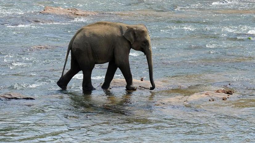 В Таиланде отряд «слонов-спасателей» помог туристам выбраться из джунглей