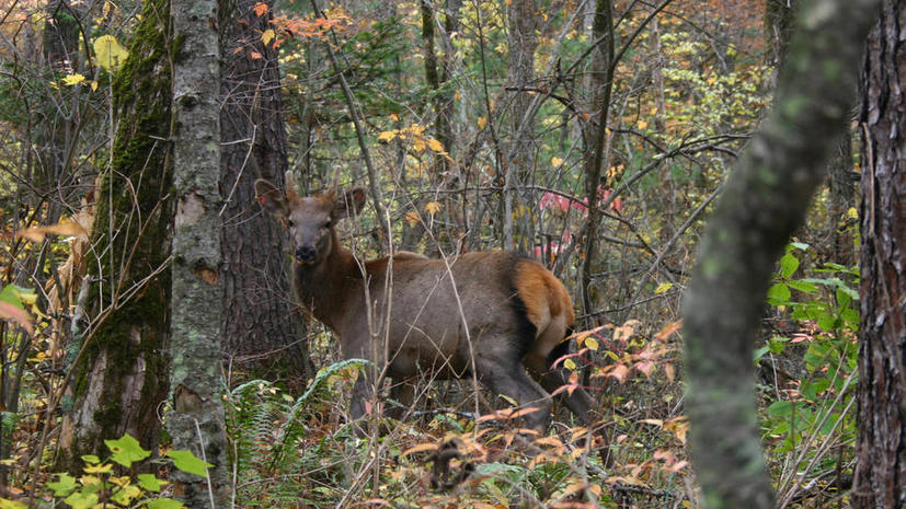 Чиновники Министерства охраны природы оказались браконьерами