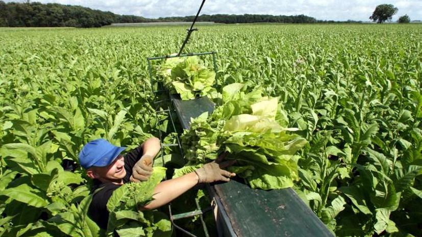 Американские фермеры обманули государство на $100 млн
