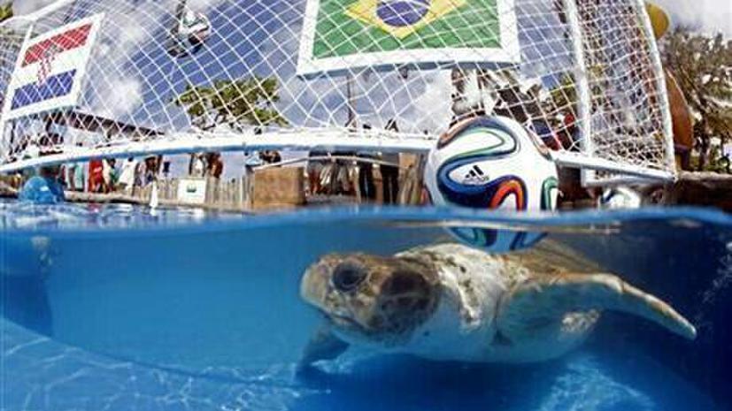 ЧМ 2014: бразильская черепаха предсказала своей сборной победу над хорватами в матче открытия