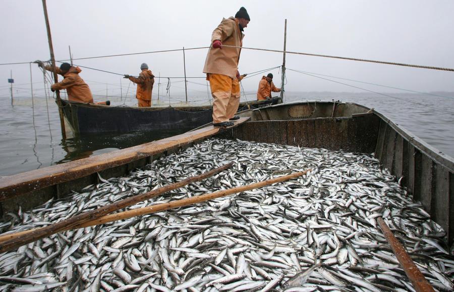 Нелегальные иностранные рыболовы лишатся квот