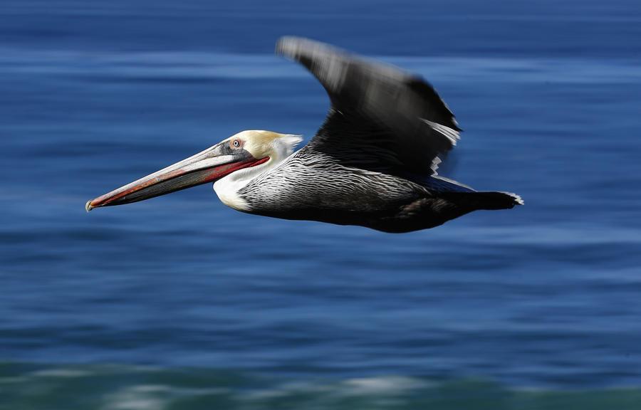 Древние птицы имели две пары крыльев