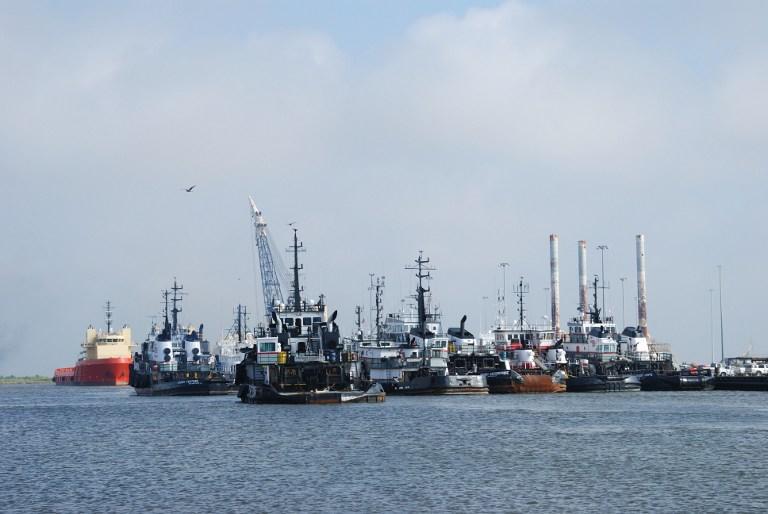 Тысячи животных продолжают гибнуть в Мексиканском заливе из-за утечки нефти