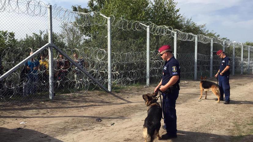 СМИ: Немецкая компания отказалась продать Венгрии колючую проволоку для защиты от беженцев