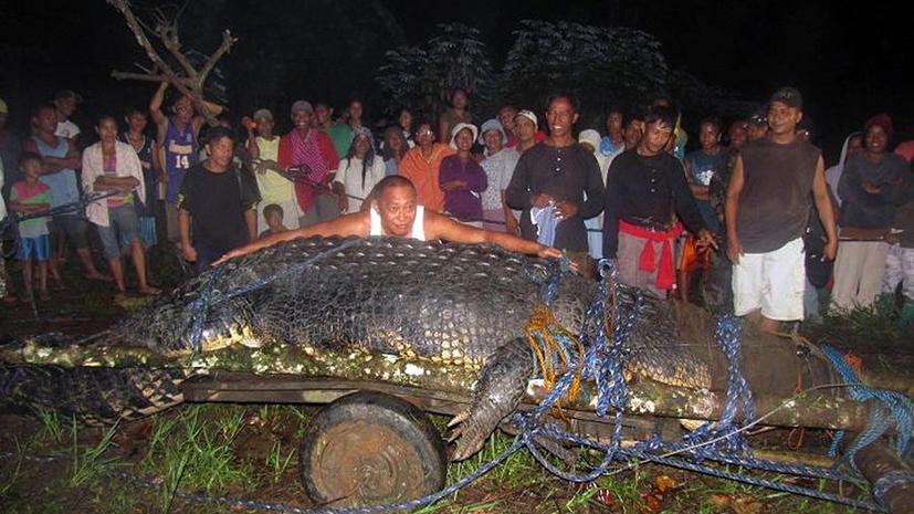 Самый большой в мире крокодил убит нейлоновым шнуром