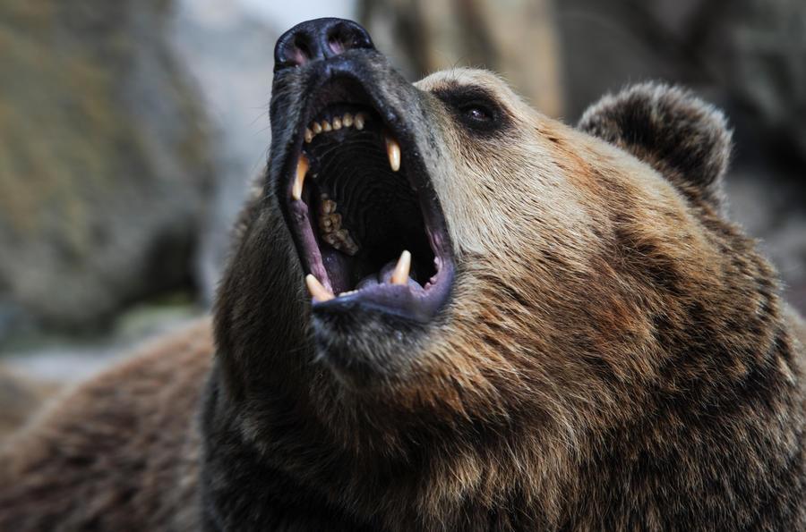В Сербии пастух одолел медведя, спасая своих овец