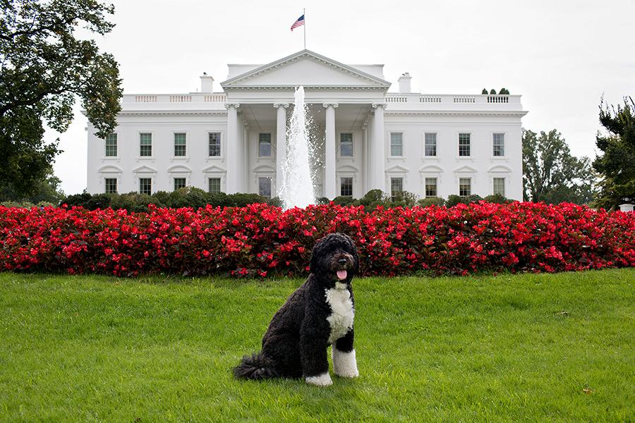 Американец угрожал убить Барака Обаму и его собаку, чтобы попасть в тюрьму
