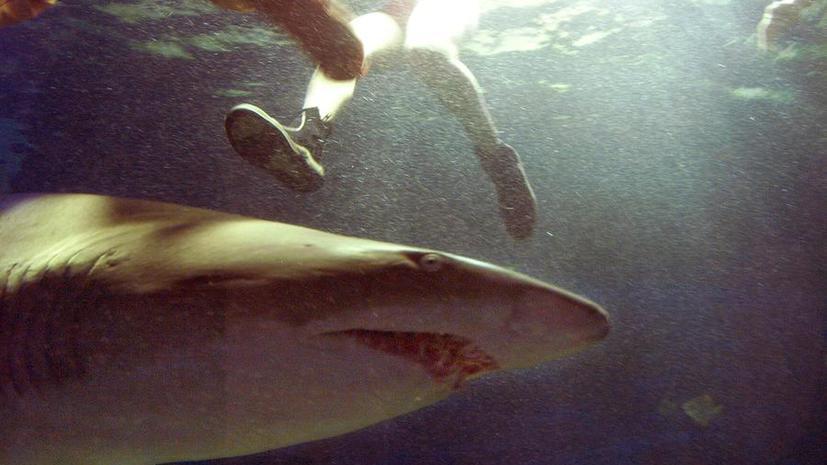 Акула убила 18-летнюю туристку в Бразилии