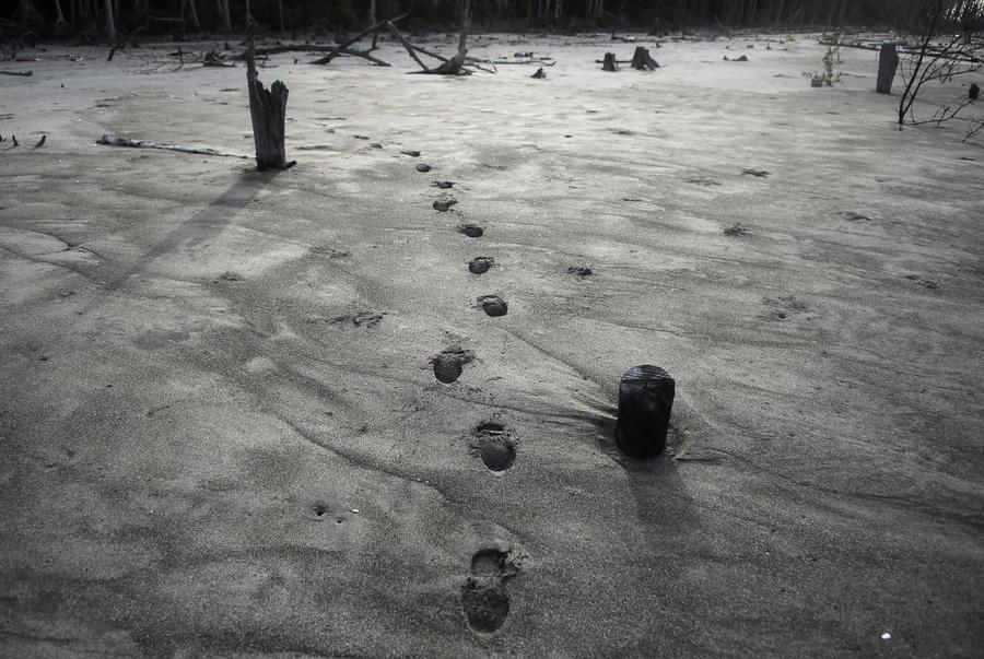Торговцы наркотиками уничтожают леса в Центральной Америке ради новых троп