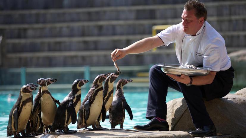 В британском зоопарке запретили одежду звериной расцветки