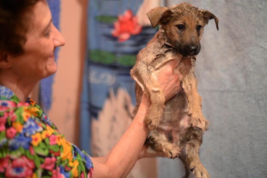 В Москве появятся передвижные ярмарки бездомных животных