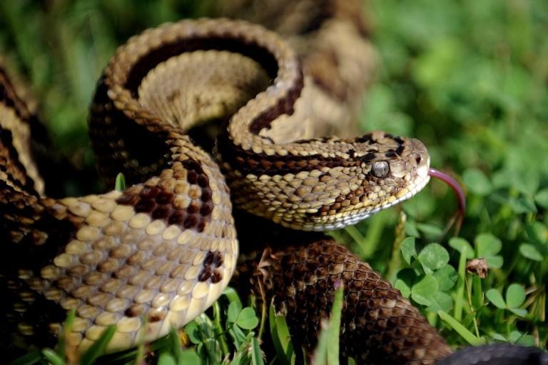 Ядовитые змеи едва не атаковали футболистов в Индии