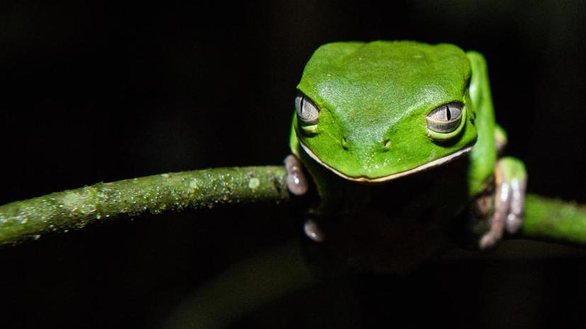 В лесах Суринама найдены 60 возможно новых видов животных