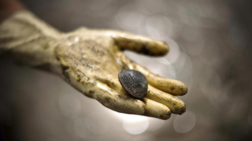 Двустворчатый моллюск, проживший 507 лет, умер от человеческой руки