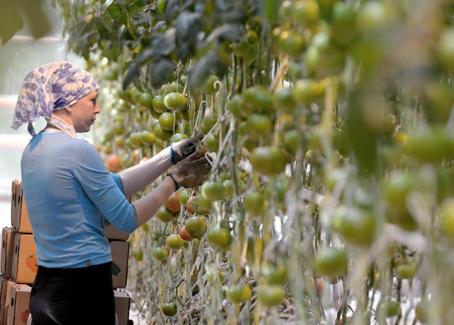 Эксперт: Санкции в отношении Турции поспособствуют развитию сельского хозяйства в России