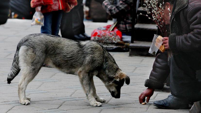 Попрошайкам могут запретить просить милостыню с детьми и животными