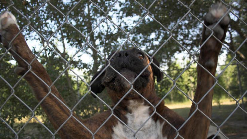 Хозяева собак-убийц в Великобритании могут сесть в тюрьму пожизненно