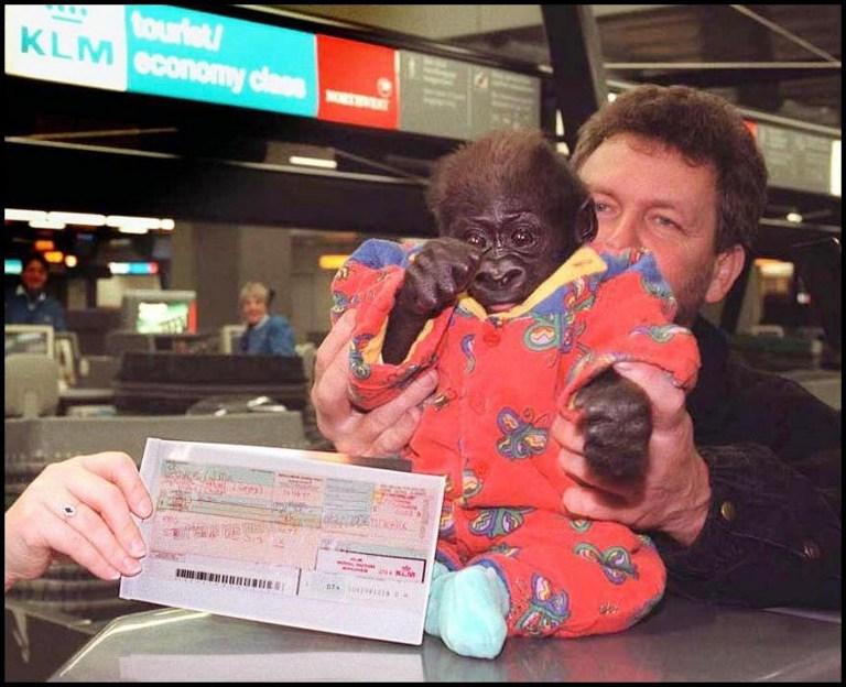 В США больше не пустят обезьян на борт самолетов