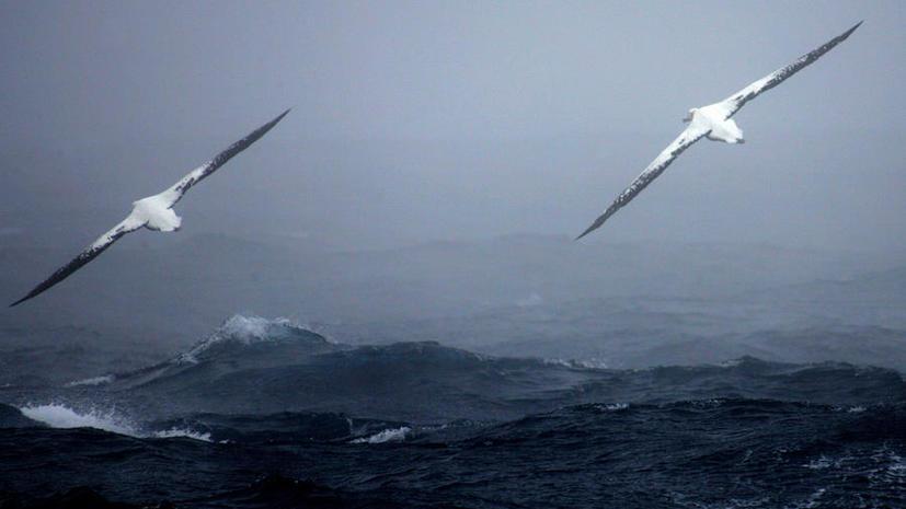 Мощное землетрясение обрушилось на побережье Антарктики
