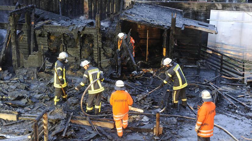 Десятки питомцев шотландского зоопарка сгорели при пожаре