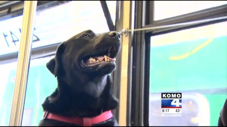 Собака, которая гуляет сама по себе, стала звездой новостей