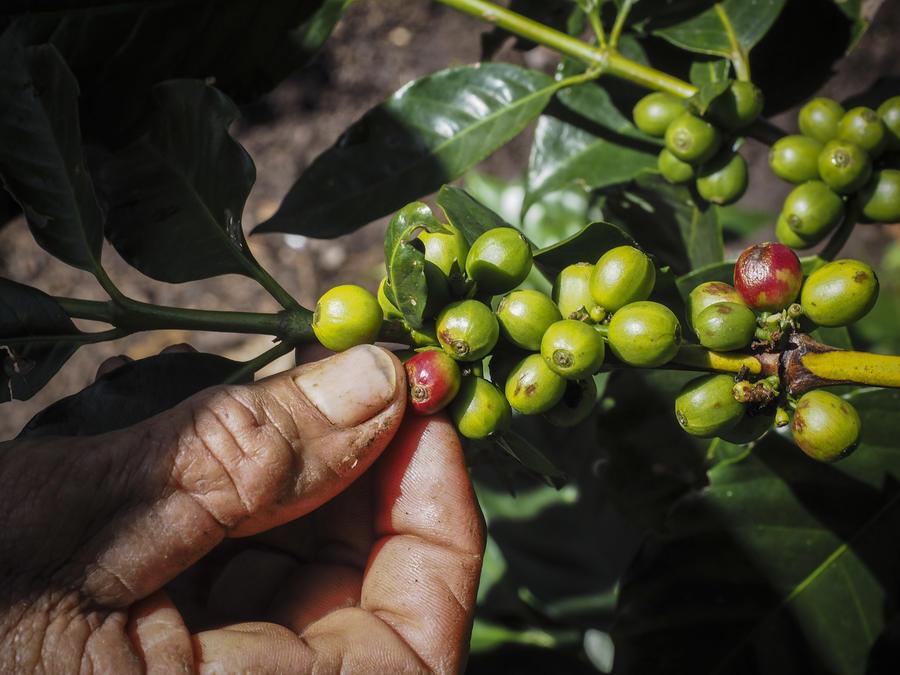 В 2014 году на рынке фьючерсов кофе обошёл золото, платину и нефть