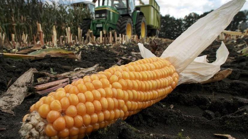 Французский парламент одобрил закон о запрете выращивания генно-модифицированной кукурузы