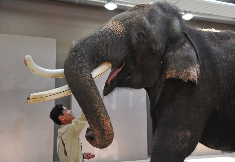 Работники южнокорейского зоопарка научили слона говорить