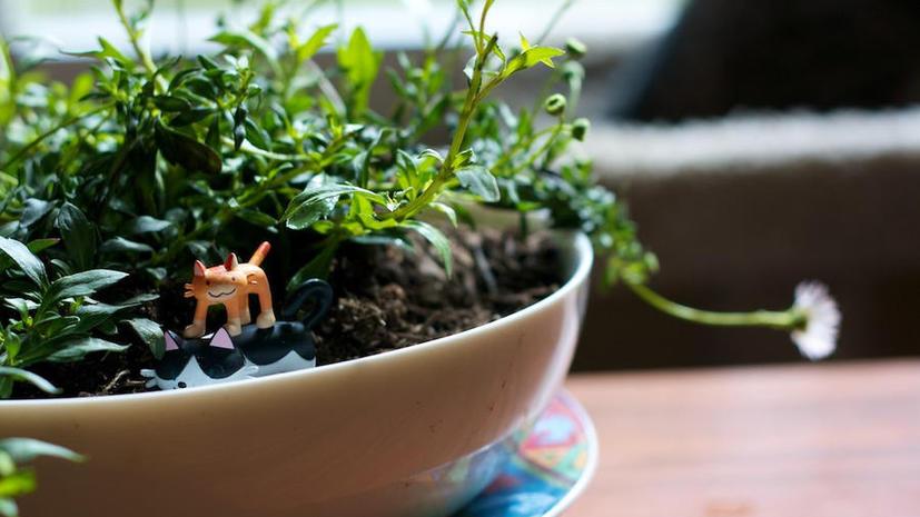Исследование: внешность и зелёные растения продвигают людей по карьерной лестнице