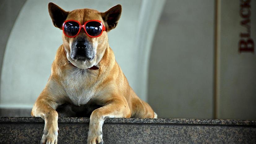 В больницах Италии домашним животным разрешили навещать пациентов