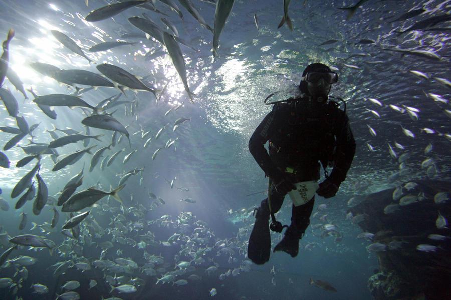 Ученые: глубочайшая часть океана кишит живыми организмами