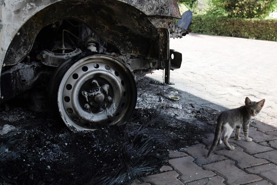 Жительница Великобритании проездила две недели с кошкой под капотом машины
