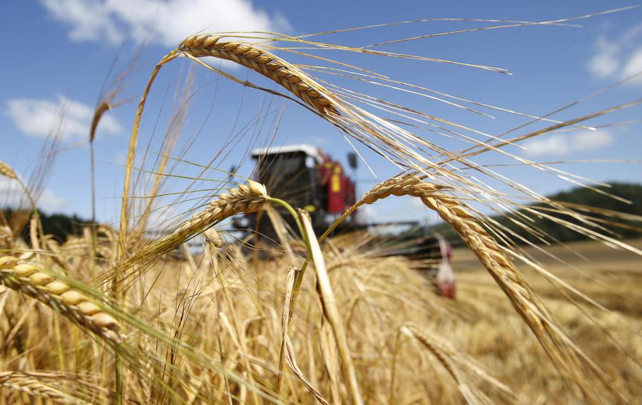 Экспорт зерна в России увеличился на 16% по сравнению с прошлым годом