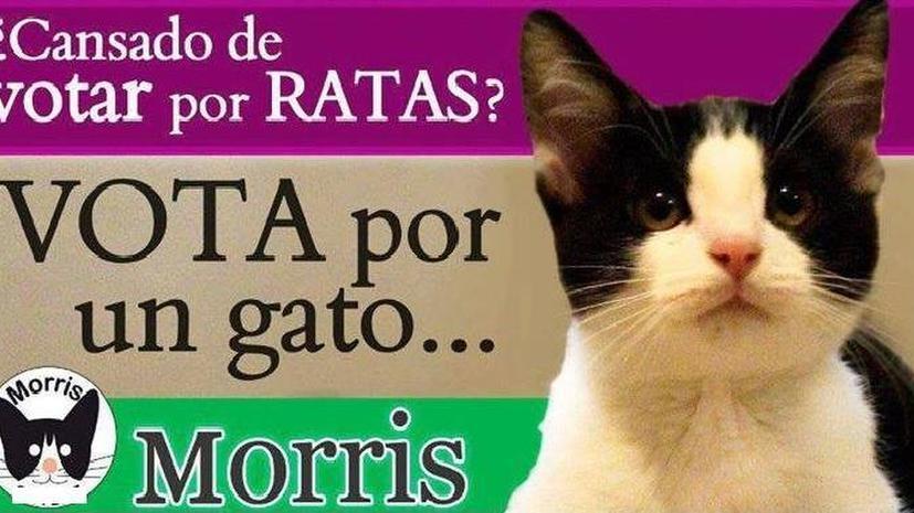 Четвероногий политик: кот стал кандидатом на муниципальных выборах в одном из мексиканских штатов