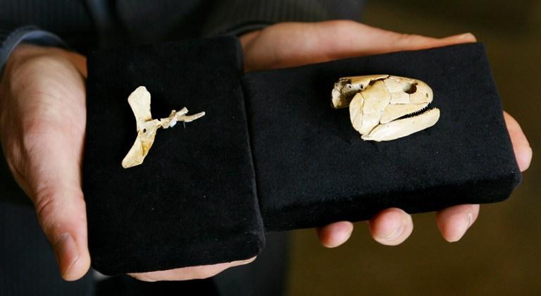 В Австралии обнаружены останки древнейшей рыбы, ей около 380 млн лет