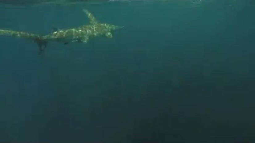 В США попавшая на крючок акула в течение двух часов тянула за собой рыбака в байдарке
