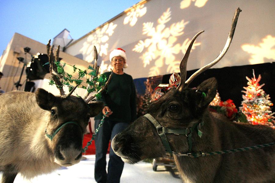 Ученые США: Олени Санта-Клауса летают благодаря сибирским мухоморам