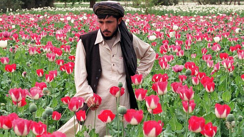Опиум заменил афганцам сельское хозяйство
